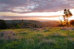 Zonsondergang in de lente op de heuvels met wilde bloemen Royalty-vrije Stock Afbeelding
