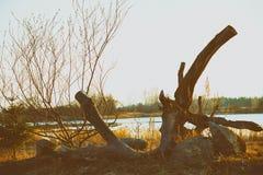 Zonsondergang in de Letse wildernis Royalty-vrije Stock Afbeeldingen