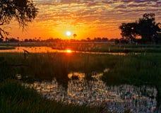Zonsondergang in de Okavango-Delta stock foto's