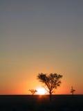 Zonsondergang in de savanne Stock Fotografie