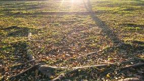 Zonsondergang in de tuin Stock Afbeeldingen