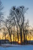 Zonsondergang in de vroege lente stock foto