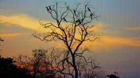 Zonsondergang in de wildernis royalty-vrije stock foto