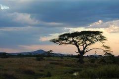Zonsondergang in de wildernis Royalty-vrije Stock Foto's