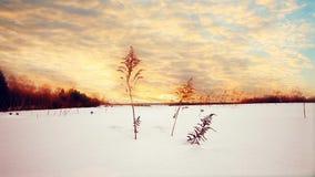 Zonsondergang in de winter bij sneeuwgebied stock footage