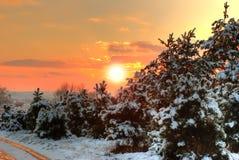 Zonsondergang in de winterbos Stock Afbeelding