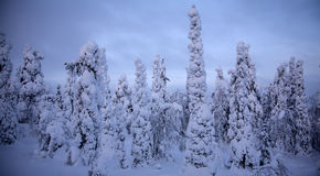 Zonsondergang in de winterbos royalty-vrije stock fotografie