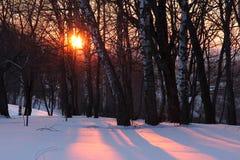 Zonsondergang in de winterbos Stock Foto's