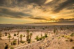 Zonsondergang in de woestijn Royalty-vrije Stock Foto's