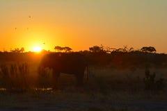 Zonsondergang in de Woestijn van Kalahari Royalty-vrije Stock Foto