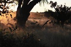 Zonsondergang in de Woestijn van Kalahari Royalty-vrije Stock Foto's