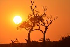 Zonsondergang in de Woestijn van Kalahari Stock Foto's