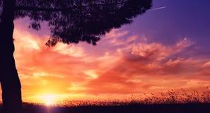 Zonsondergang, de zomeravond Stock Afbeelding