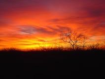Zonsondergang de Zuid- van Texas Stock Foto