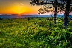 Zonsondergang in Dolly Sods Wilderness, het Nationale Bos van Monongahela, wij stock foto's