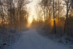 Zonsondergang door bomen en mist Royalty-vrije Stock Foto
