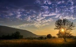 Zonsondergang door boomtakken Royalty-vrije Stock Foto