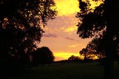 Zonsondergang door de bomen Royalty-vrije Stock Foto