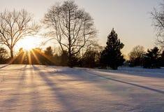 Zonsondergang door de bomen Royalty-vrije Stock Afbeelding