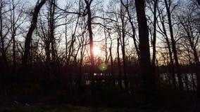 Zonsondergang door de bomen Royalty-vrije Stock Fotografie