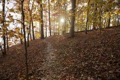 Zonsondergang door de herfstgebladerte Royalty-vrije Stock Afbeelding