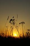 Zonsondergang door een gras stock afbeeldingen