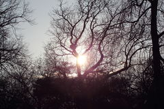 Zonsondergang door Gesilhouetteerde Bomen Royalty-vrije Stock Foto