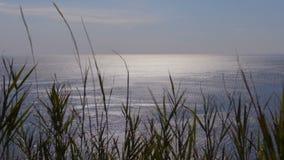 Zonsondergang door het gras zonbezinningen over het overzees, gras die in wind slingeren stock videobeelden