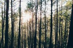 Zonsondergang door het hout Stock Fotografie