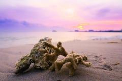 Zonsondergang door het strand royalty-vrije stock fotografie