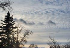 Zonsondergang door Pijnbomen stock fotografie