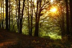 Zonsondergang in een bos stock afbeeldingen