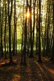 Zonsondergang in een bos royalty-vrije stock foto
