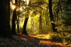Zonsondergang in een bos royalty-vrije stock afbeeldingen