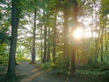 Zonsondergang in een bos Royalty-vrije Stock Fotografie