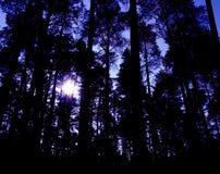 Zonsondergang in een donker en ongebruikelijk magisch bos Stock Foto