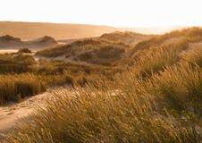Zonsondergang in een duin van het strand Royalty-vrije Stock Afbeeldingen