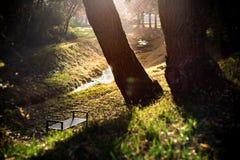 Zonsondergang in een park Stock Fotografie