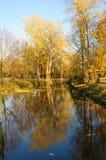 Zonsondergang in een park met boombezinning over het water Royalty-vrije Stock Foto