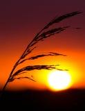 Zonsondergang in een weide royalty-vrije stock afbeeldingen