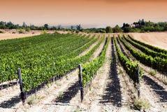 Zonsondergang in een wijngaard stock afbeelding