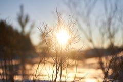 Zonsondergang in een Zonnige bos de wintersneeuw De ochtend vóór Kerstmis Fairytalebos in het zonlicht stock afbeeldingen