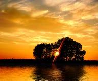 Zonsondergang en bomen royalty-vrije stock foto's