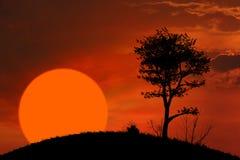 Zonsondergang en boomachtergrond Stock Afbeelding