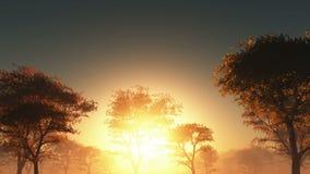Zonsondergang en bos in mist