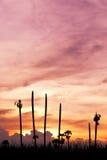 Zonsondergang en de dode palm Stock Afbeeldingen