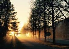 Zonsondergang en de stad stock fotografie