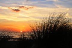 Zonsondergang en Grassen stock foto's
