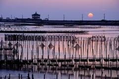 Zonsondergang en intertidal streek royalty-vrije stock foto's