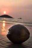 Zonsondergang en kokosnoot stock afbeelding
